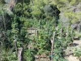 Piantagione di droga sulle colline cilentane. Arrestati due napoletani.