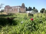 Scavi di Paestum: al via le gite on line.